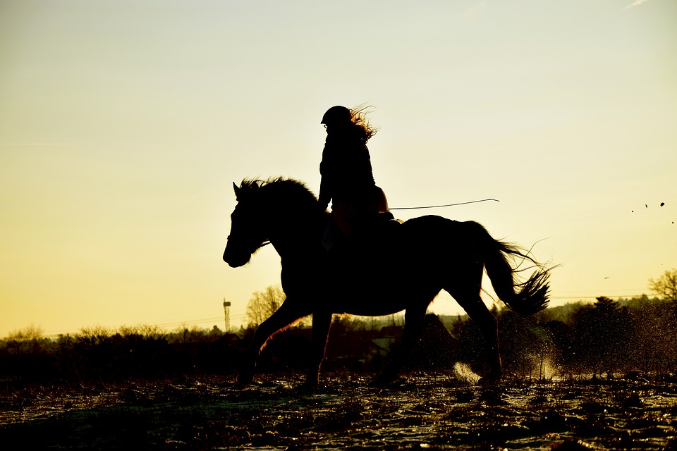 sklepy jeździeckie